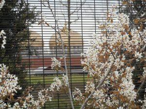 betafence panele ogrodzeniowe securifor 4d zoo Brugelette belgia Ogradzamy